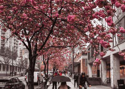 keyrenter-city-sidewalk-blossoms